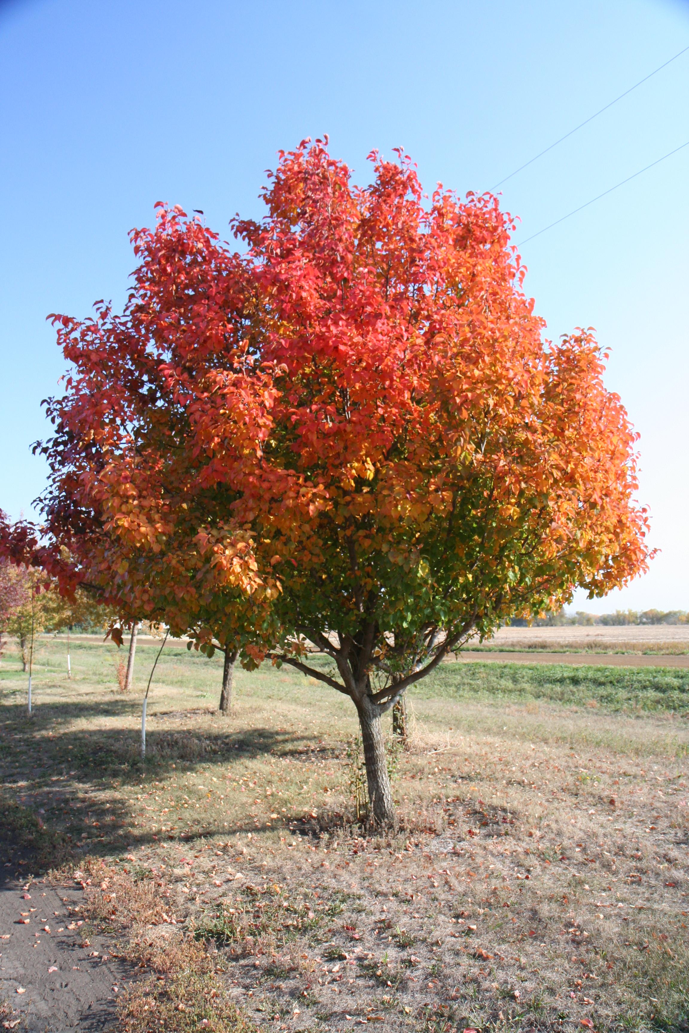 Trees – COUNTRY ACRES TREE FARM